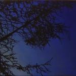 Study 3 40 x 30 cm Oil, acrylic & ink on canvas 2005