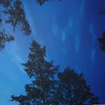Illan Sini 150 x 110 cm Oil acrylic and ink on canvas. 2007